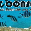 Reef Conservation Courses