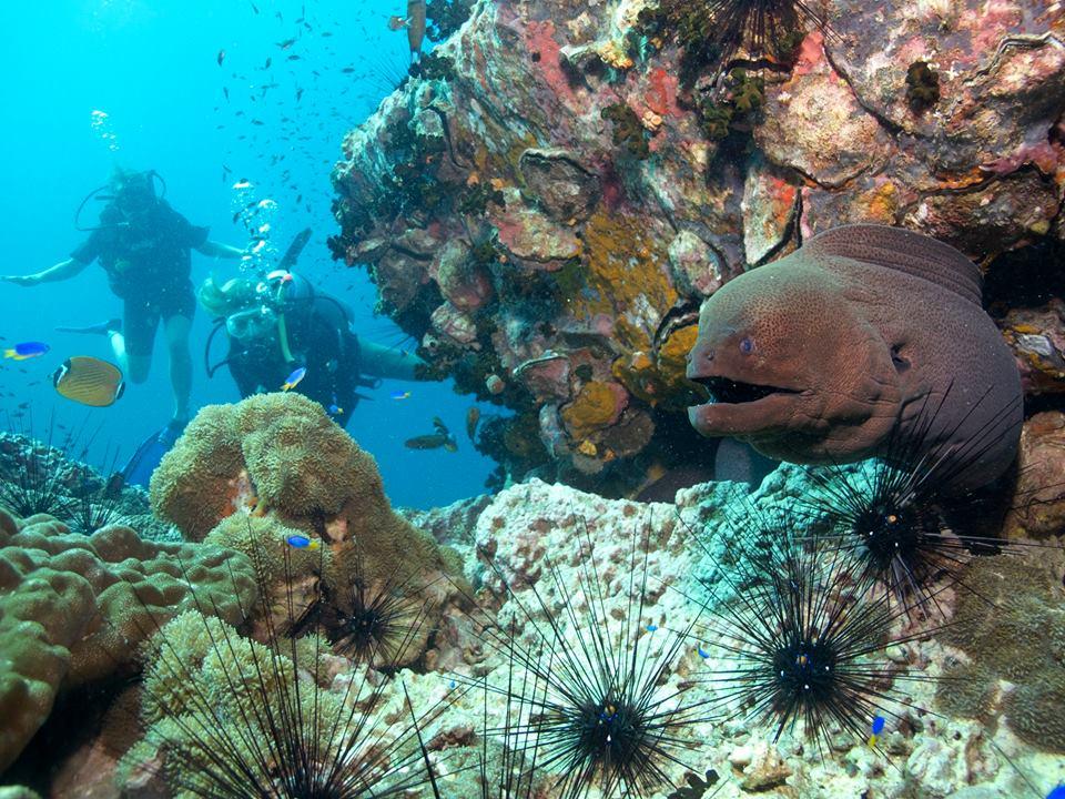 Roctopus Try Dive