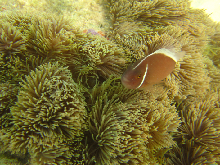 Snorkeling at Tanote Bay