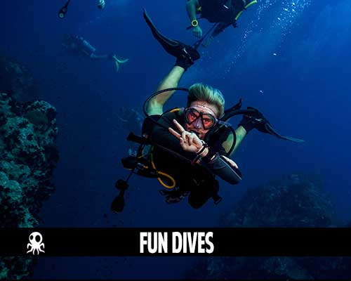 fun dive roctopus